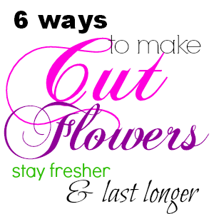Cut flowers are a very perishable luxury; most start to look pretty sad within a few days. But there are some ways to prolong the life of a cut-flower bouquet.